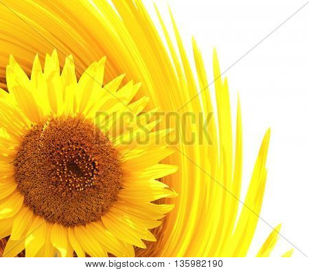 Decorative background with sunflower. Isolated over white background