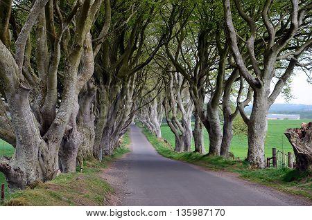 Dark Hedges Beech Trees Nature Landscape Photography