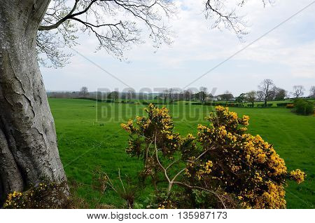 One Old Tree And Pasture Nature Landscape Photography