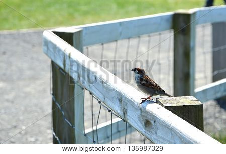 Little Bird Sitting Wood And Wire Fence
