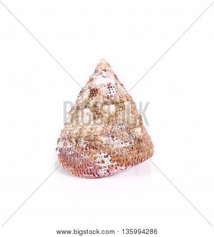 Shells Close Up Isolated On White Background