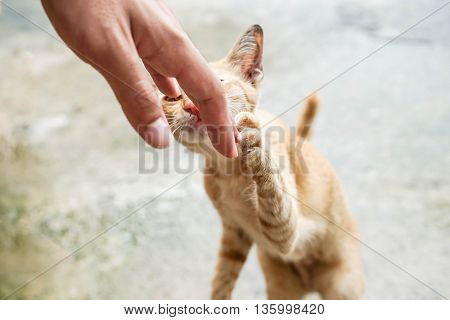 Playing with a little cat by hand