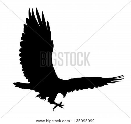 Eagle Flying Silhouette Isolated On White Background. Vector Illustration