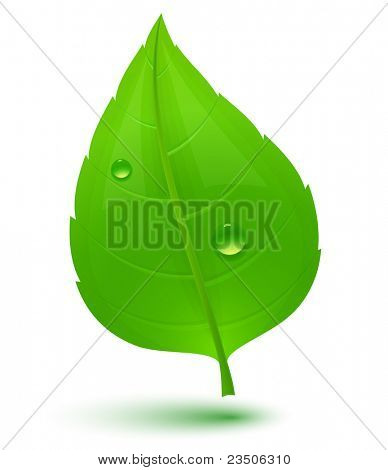 Green leaf with drops of water. Eco Concept. Raster version