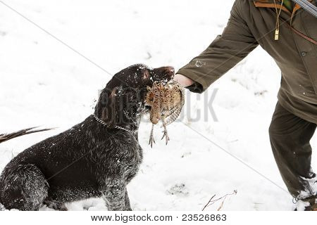 hunter with a dog at hunt