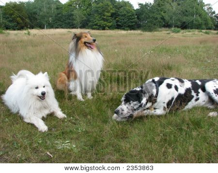 A Happy Trio Of Dogs