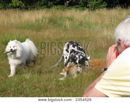Man Taking Photos Of Dogs Playing