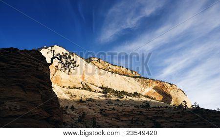 High Plateau Pines