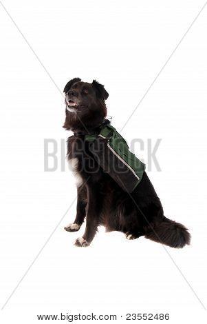 Black Dog Wearing A Backpack