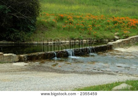 Poppies And Stream