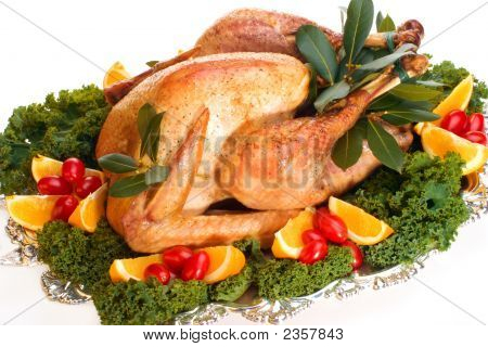Holiday Turkey On White