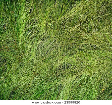 Close-up image of fresh spring green grass wallpaper, yard