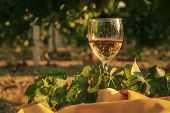 Glass With White Wine In Vineyard On Old Table. Vineyard At Sunset. White Wine Glass, Wine Bottle An poster