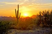 Sunset View Of The Arizona Desert With Saguaro Cacti And Mountains poster