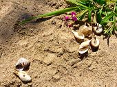 Sea Shells On Sand As Frame. Sea Shells Sand As Frame Background. Summer Vacation Background Frame W poster