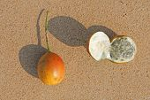 Two Orange Open Passion Fruit With Seeds. Passion Fruit Closeup On The Beach, On The Sand And On The poster