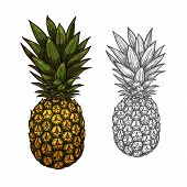 Pineapple Tropical Fruit Isolated Sketch. Fresh And Ripe Ananas With Bunch Of Green Leaves For Fruit poster