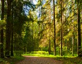 Autumn Forest Landscape With Trees In The Forest In Sunny Weather. Sunny Autumn Forest Nature, Conif poster