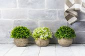 Artificial Plants In Stone Pots. Home Interior Decor. Copy Space poster