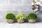 Artificial Plants In Stone Pots. Home Interior Decor. Copy Space poster