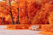 Autumn Colorful Landscape. White Bench In The Autumn Park Under Red Autumn Trees poster