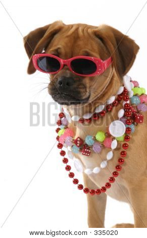 Lola's Mardi Gras
