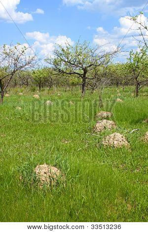 Anthill Among Green Grass