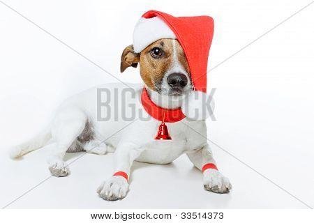 perro de Santa