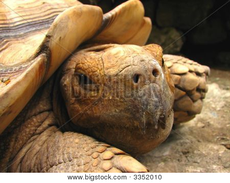 Tortoise Close-Up