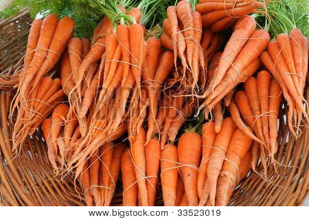 Organically Grown Carrots