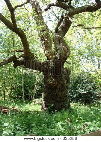 Sherwood Forest 001