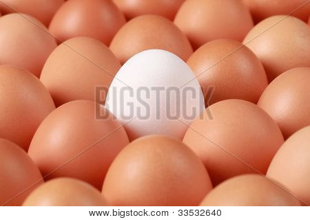 Lonesome Egg