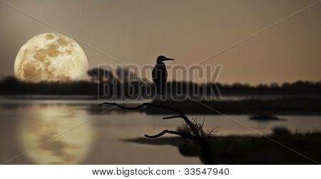 Great blue heron, ardea Herodias, profiled against sky