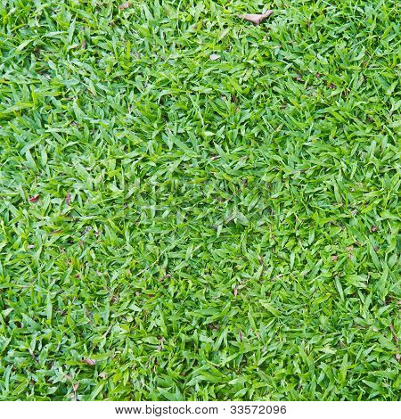 Natural Outdoor Green Grass (in The Shade)