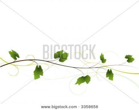 Vine Floral Background