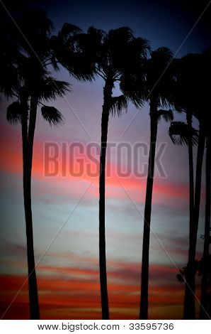 Tall Palms at Sunset