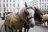 stock photo of stagecoach  - Horses waiting to whisk tourists around the beautiful city of Vienna. Spanish Riding School built in 1735 as an extension to the Hofburg Palace complex (13th Century). ** Note: Shallow depth of field - JPG