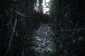 Light Far Away In The Dark Mysterious Forest With Lighten Path poster