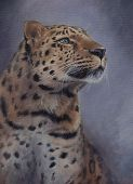 Wild Amur Leopard Portrait Painted With Oil Paints On Canvas - Critically Endangered Species Hand Dr poster
