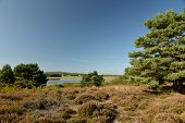 Godlingston Heath Moorland And Landscape At Arne Nature Reserve Near Wareham, Dorset On The South Co poster