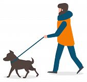 Man Walking Dog On Leash Vector, Isolated Character In Flat Style. Male Wearing Winter Clothes Thick poster