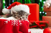 Sleeping Christmas Cat. Beautiful Little Tabby Sleeping Kitten, Kitty, Cat In Red Santa Claus Hat Ne poster