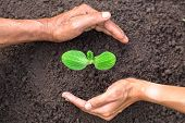 Father And Daughter Hands. Help Each Other Protect The Growing Seedlings From Fertile Soil.concept O poster