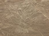 Tree Geoglyph, Nazca Mysterious Lines And Geoglyphs Aerial View, Landmark In Peru poster