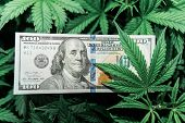 American Dollar Bill On Cannabis Leaves. Taxation And Marijuana. The Economy Of Hemp Industry. Tax O poster