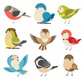 Set Of Cute Little Colorful Birds Isolated On White Background. Common House Sparrow Couple, Male An poster