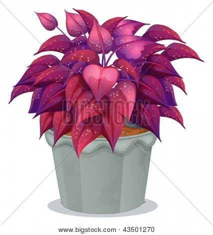 Illustration of a plant with violet leaves on a white background