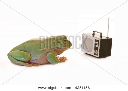 Tv Frog