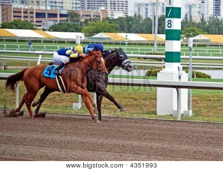 Horses Head To Head At The Eight Pole