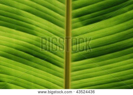 Tropical Leaf Close-up